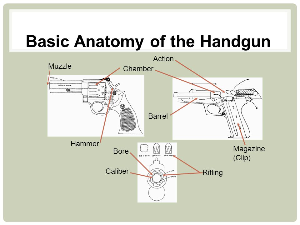 Basic Anatomy of the Handgun