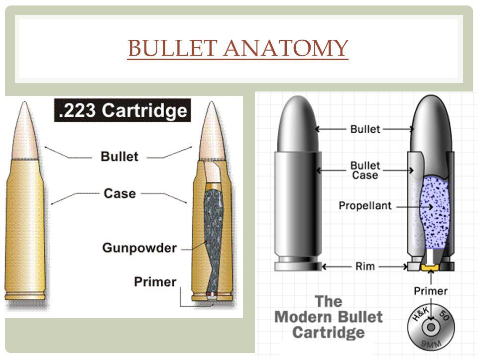 Bullet Anatomy