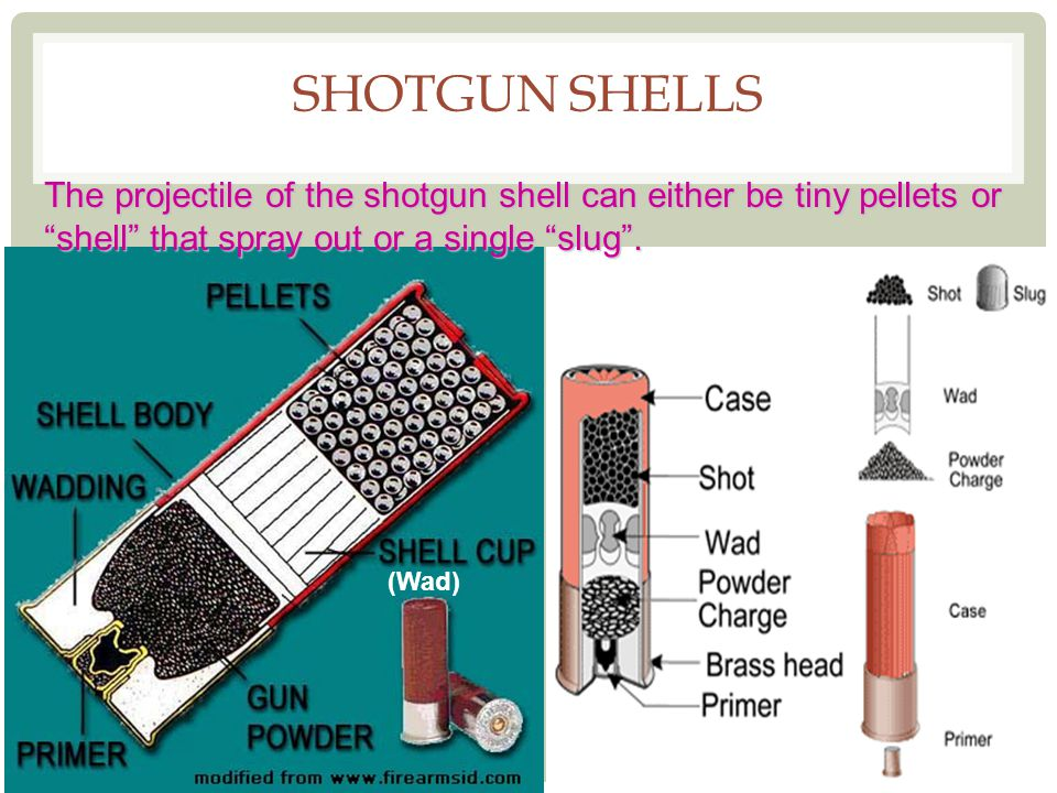 Shotgun Shells The projectile of the shotgun shell can either be tiny pellets or shell that spray out or a single slug .