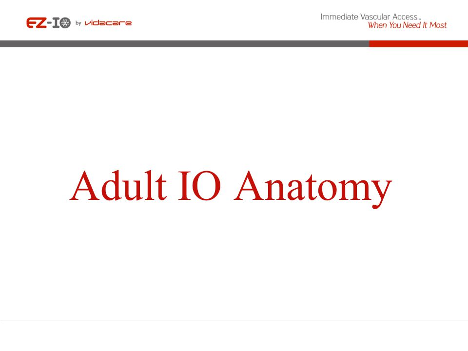 Adult IO Anatomy