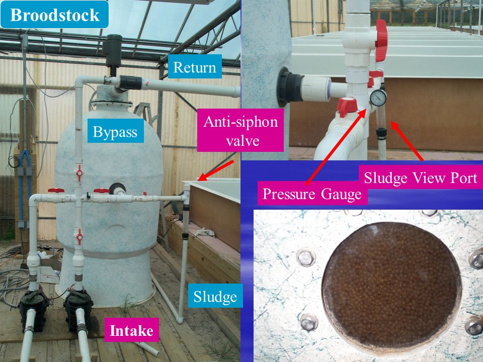 Broodstock Return Anti-siphon Bypass valve Sludge View Port