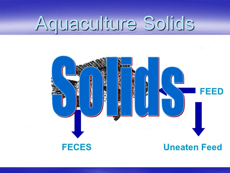 Aquaculture Solids Solids FEED FECES Uneaten Feed