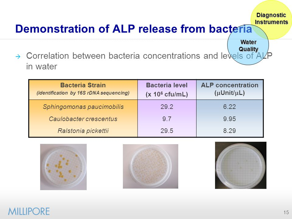 Demonstration of ALP release from bacteria