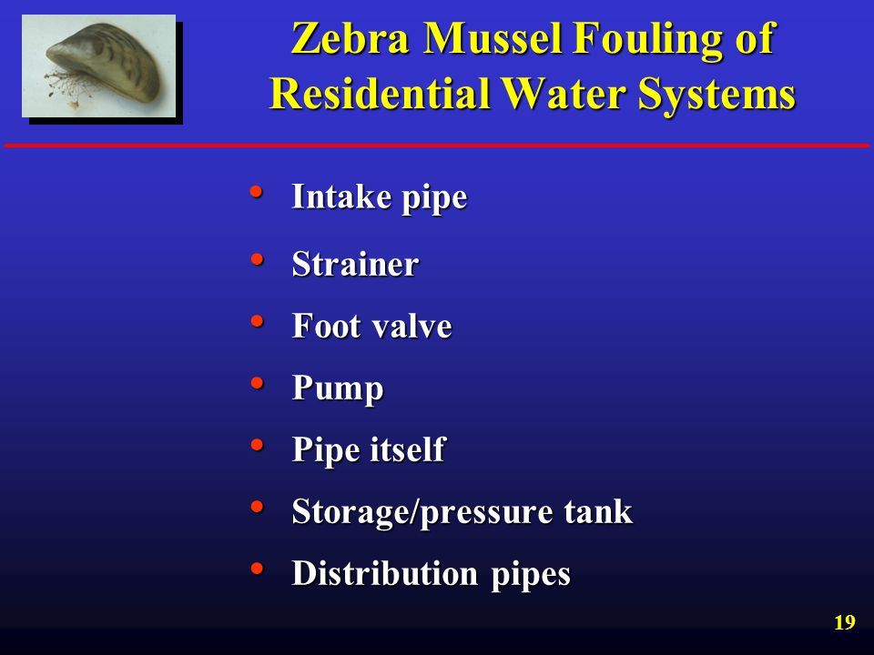 Zebra Mussel Fouling of Residential Water Systems
