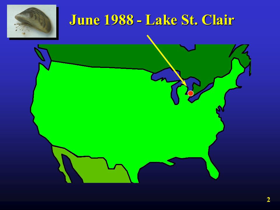 June 1988 - Lake St. Clair Since its discovery in the Great Lakes in 1988... 2