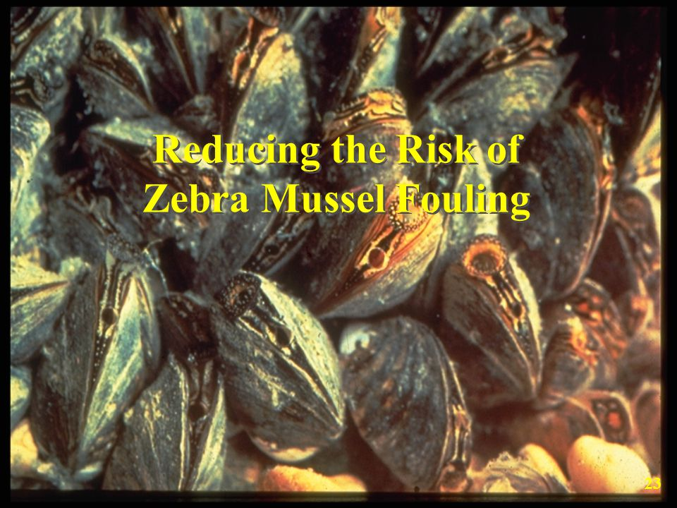Reducing the Risk of Zebra Mussel Fouling