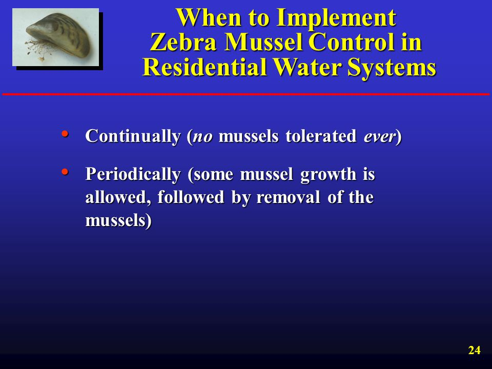 When to Implement Zebra Mussel Control in Residential Water Systems
