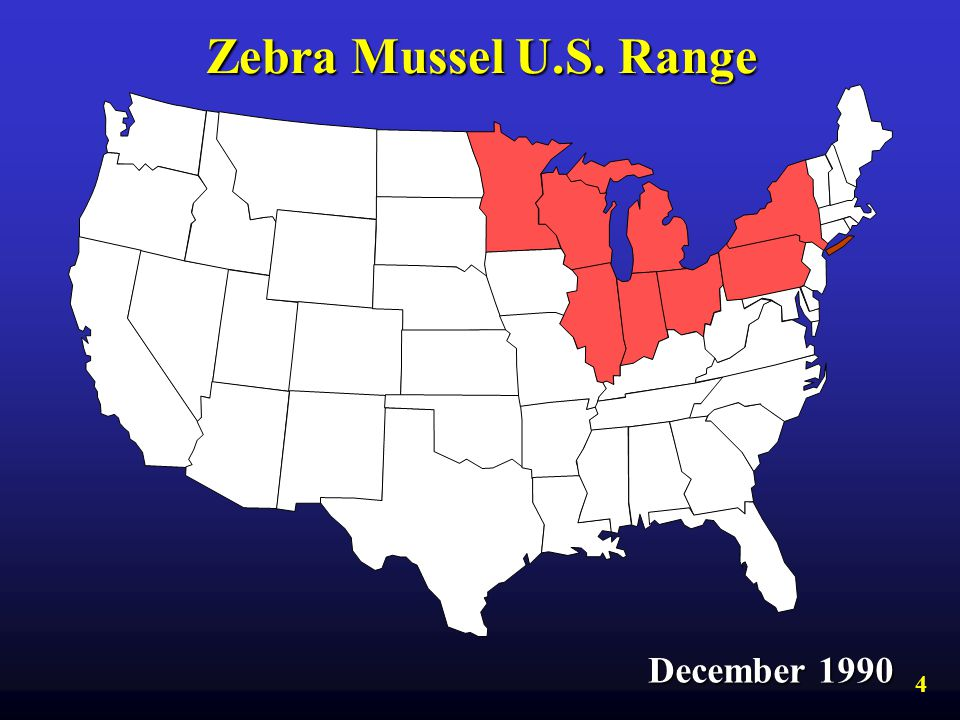 Zebra Mussel U.S. Range December 1990 4