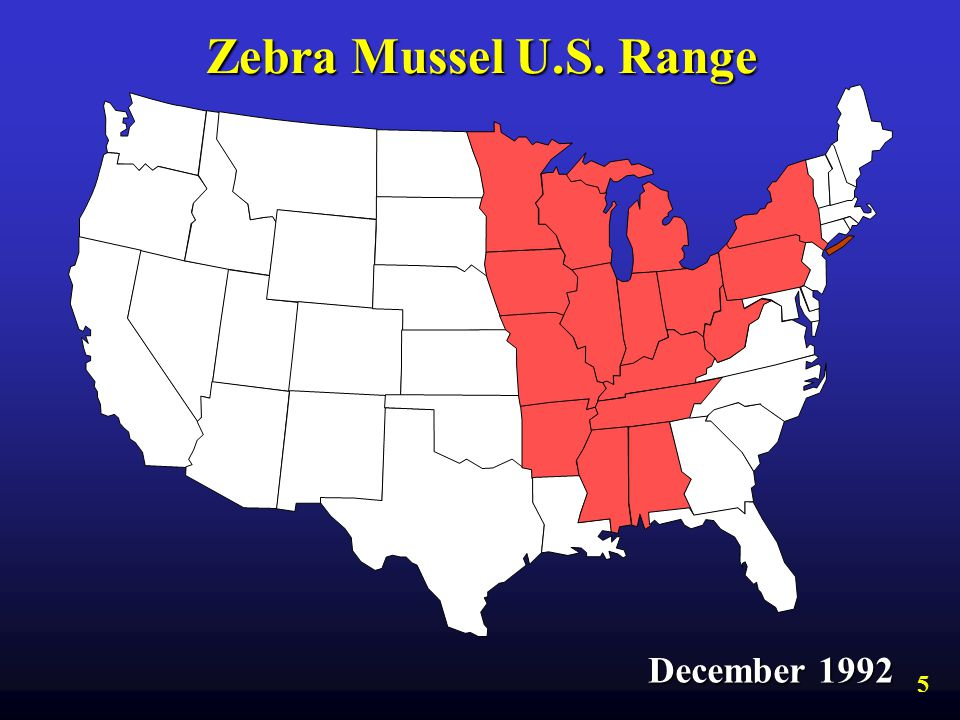 Zebra Mussel U.S. Range December 1992 5