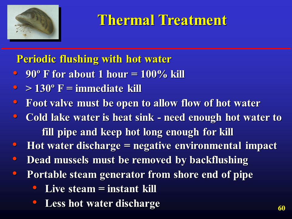 Thermal Treatment Periodic flushing with hot water