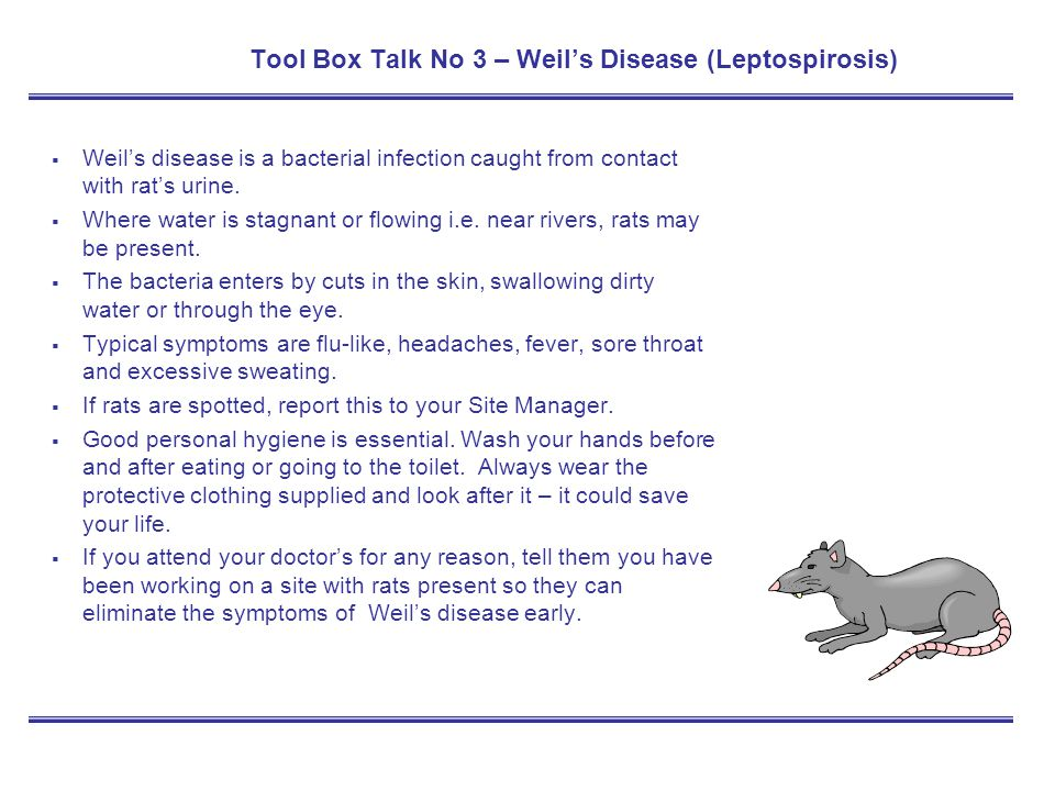 Tool Box Talk No 3 – Weil's Disease (Leptospirosis)