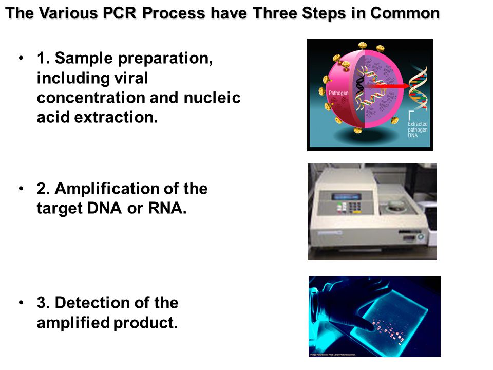 The Various PCR Process have Three Steps in Common