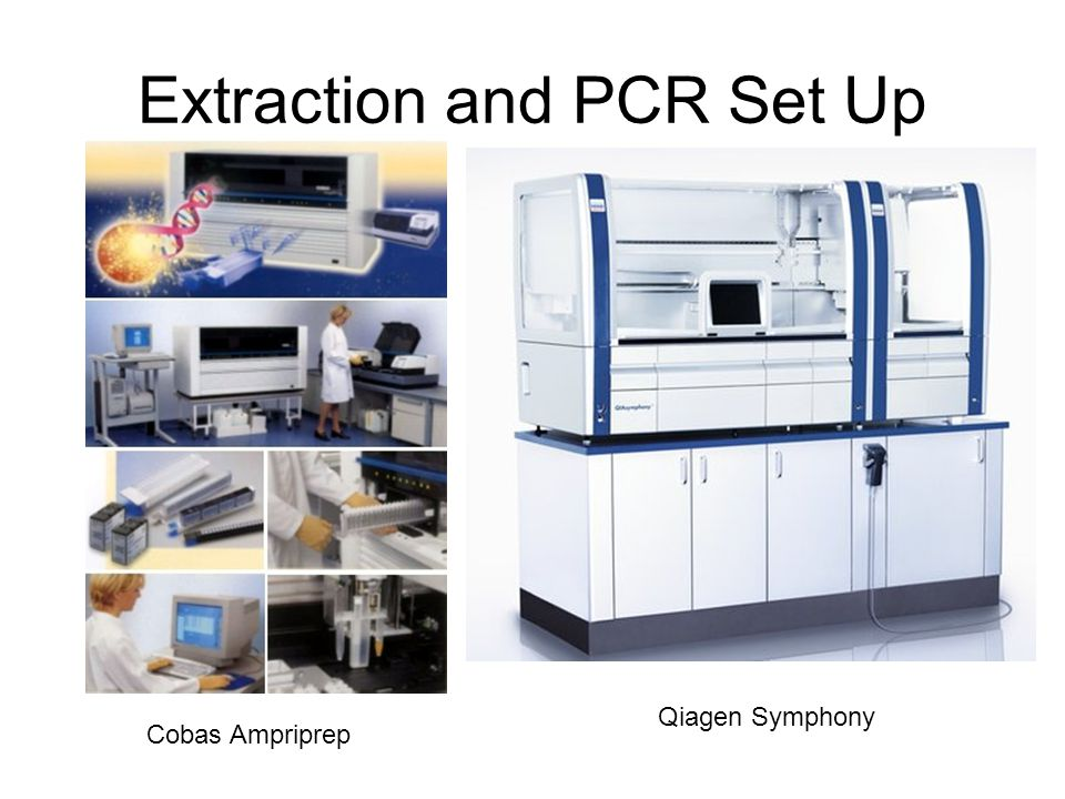 Extraction and PCR Set Up