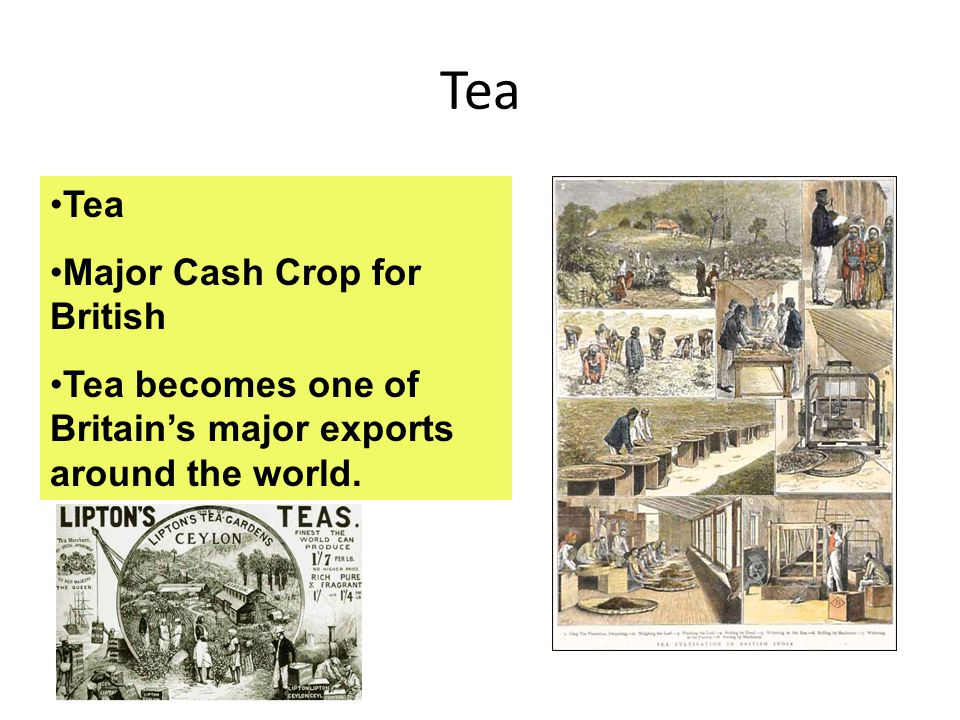 Tea Tea Major Cash Crop for British