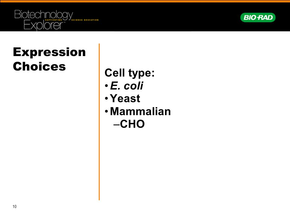 Expression Choices Cell type: E. coli Yeast Mammalian CHO