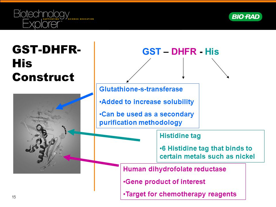 GST-DHFR-His Construct