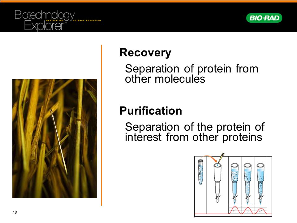 Recovery Separation of protein from other molecules Purification Separation of the protein of interest from other proteins