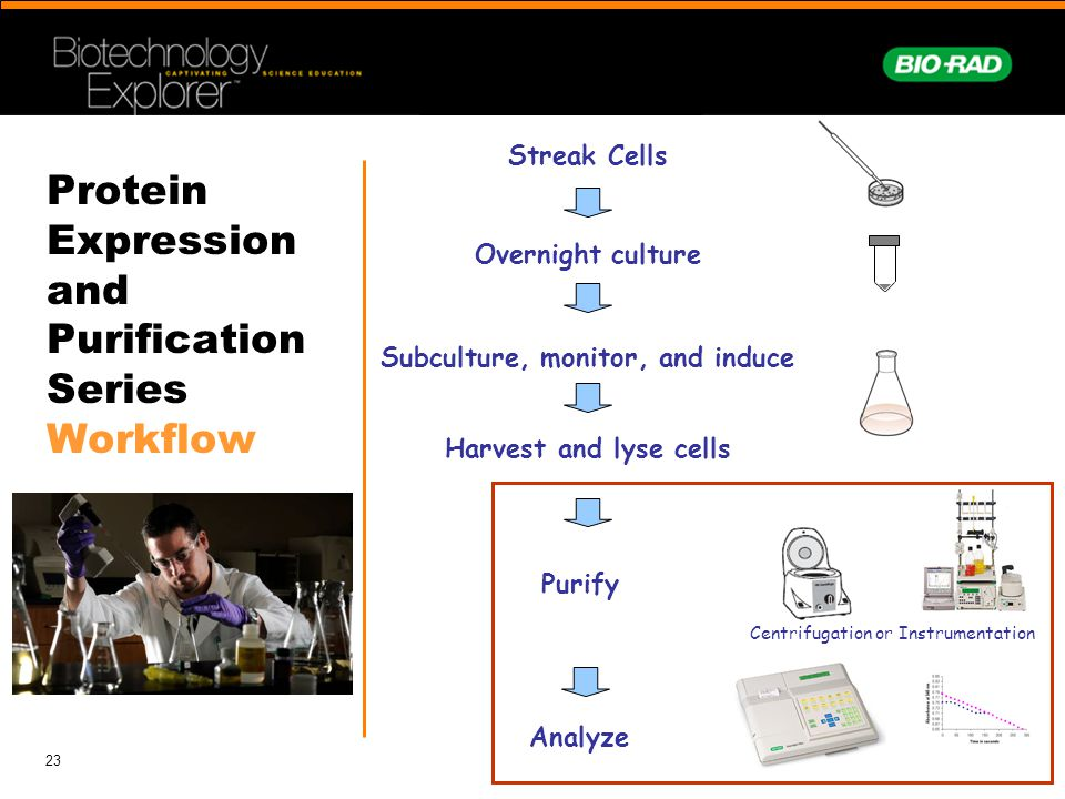 Protein Expression and Purification Series Workflow