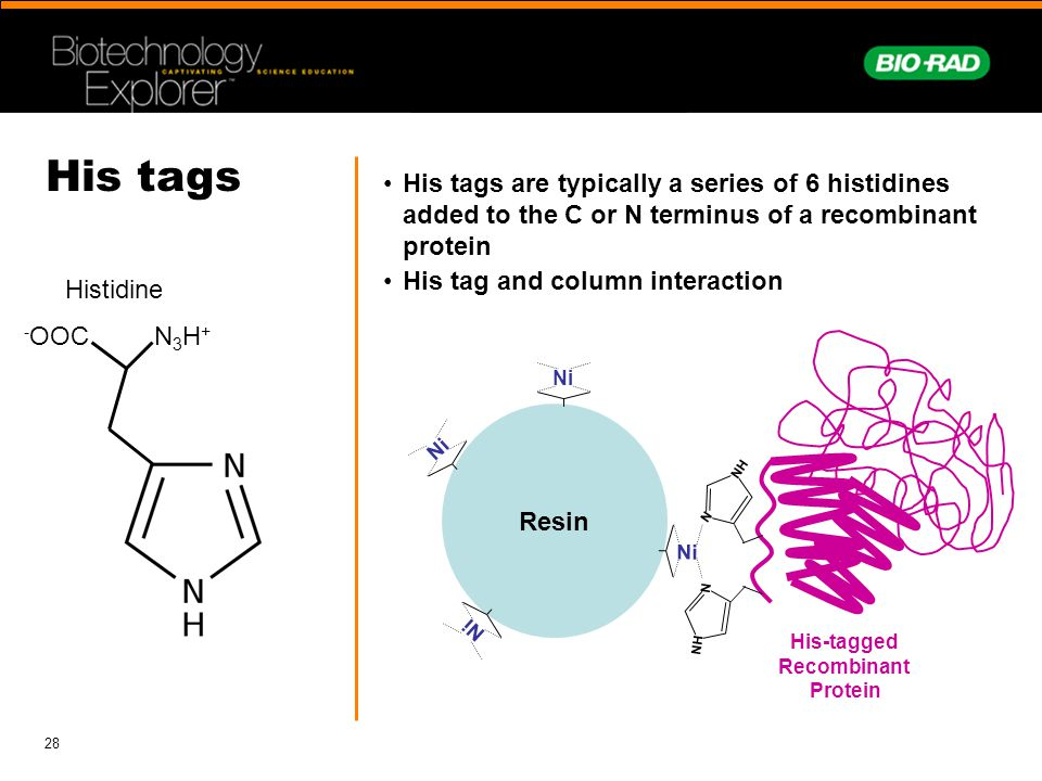 His tags His tags are typically a series of 6 histidines added to the C or N terminus of a recombinant protein.