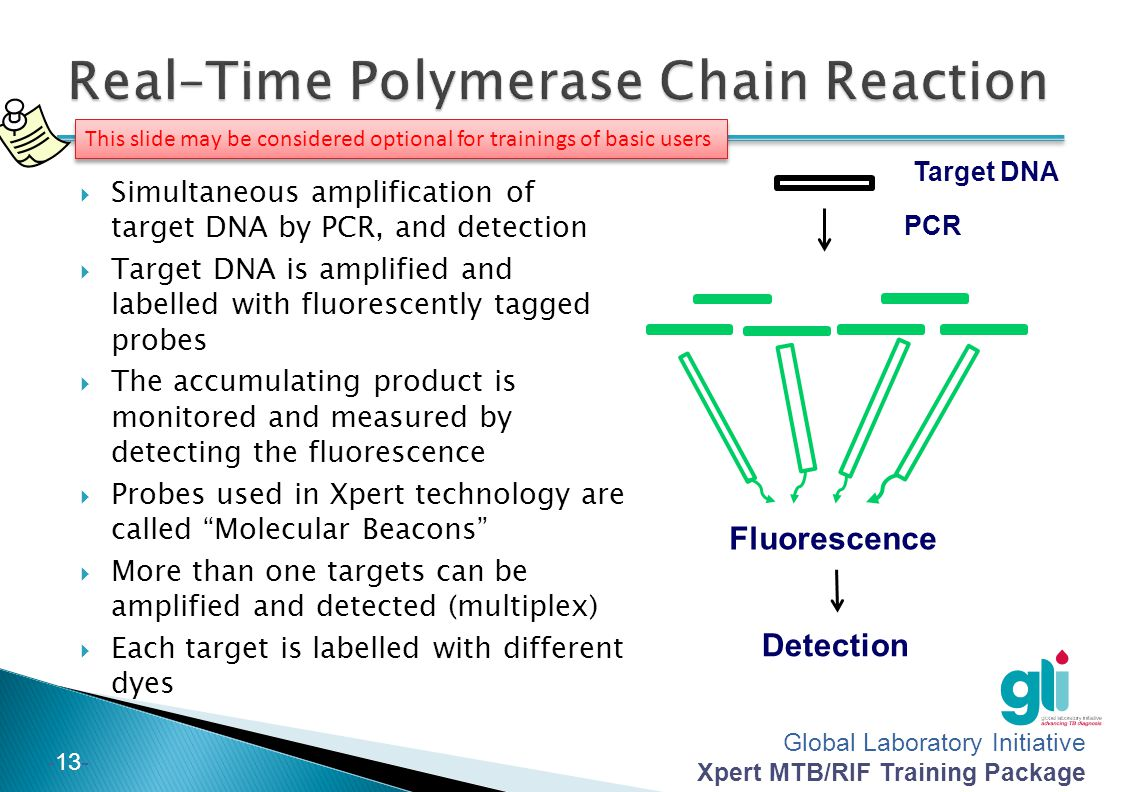 Real–Time Polymerase Chain Reaction