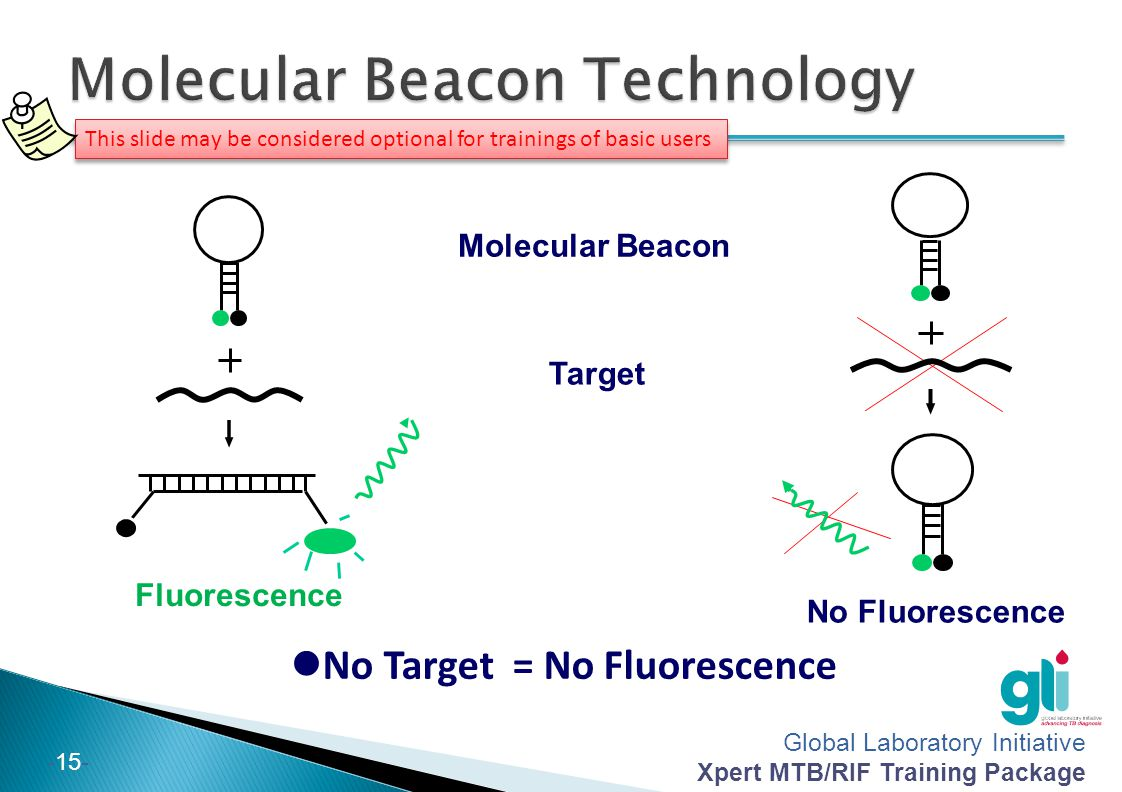 Molecular Beacon Technology