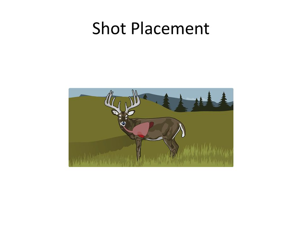 Shot Placement