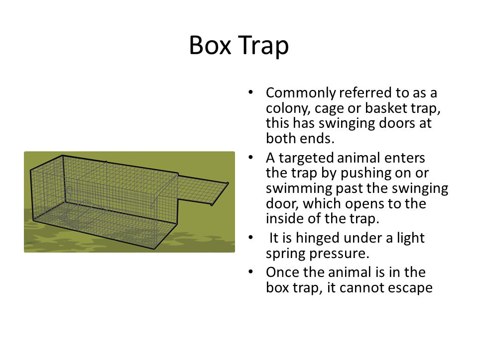 Box Trap Commonly referred to as a colony, cage or basket trap, this has swinging doors at both ends.