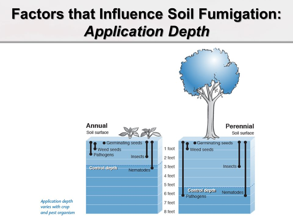 Factors that Influence Soil Fumigation: