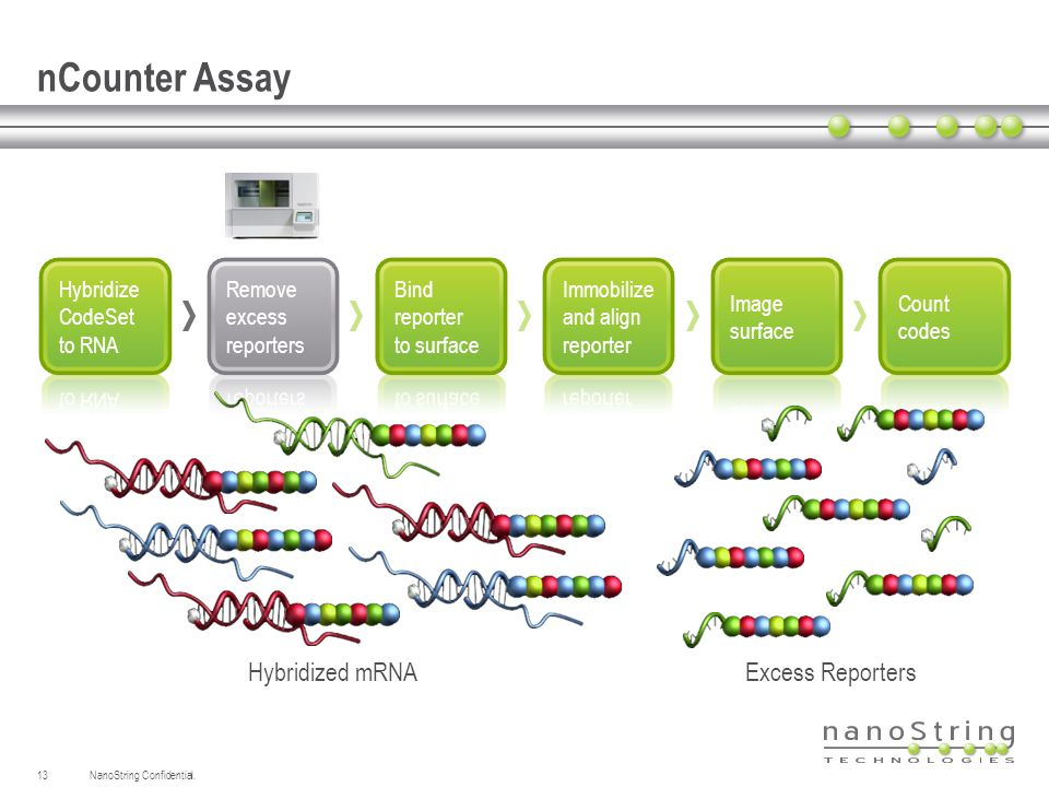 nCounter Assay Hybridized mRNA Excess Reporters Hybridize
