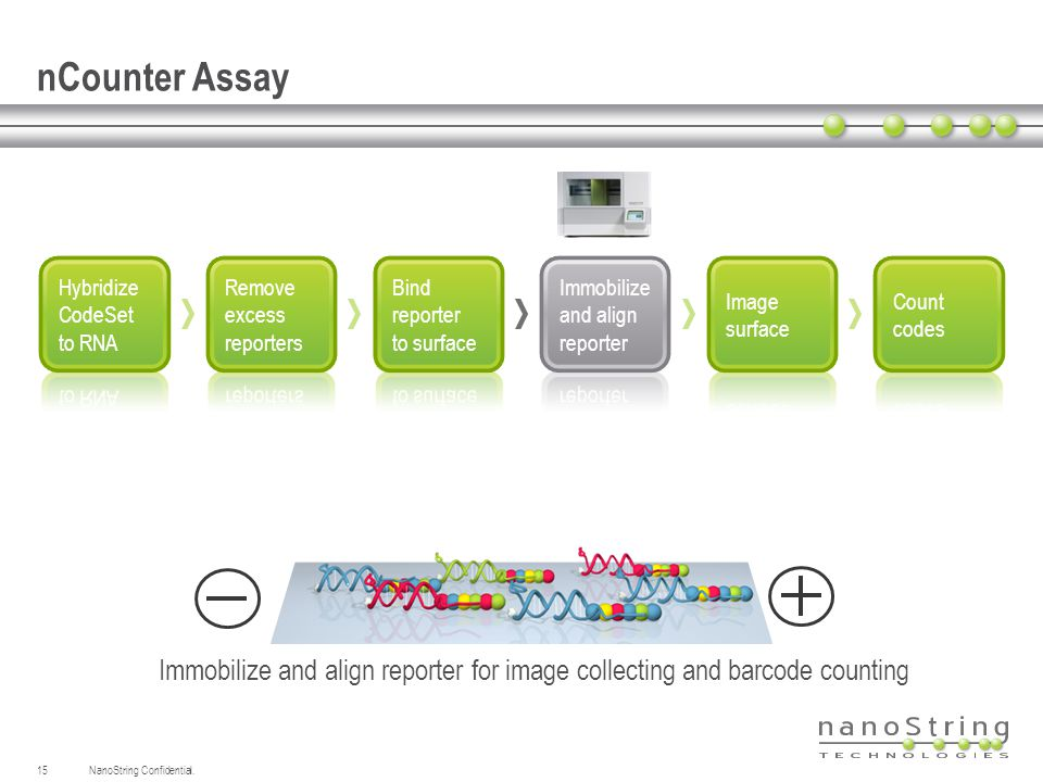 nCounter Assay Hybridize. CodeSet to RNA. Remove. excess. reporters. Bind. reporter. to surface.