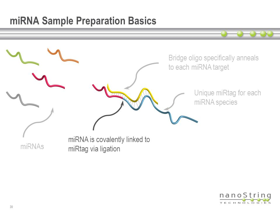 miRNA Sample Preparation Basics
