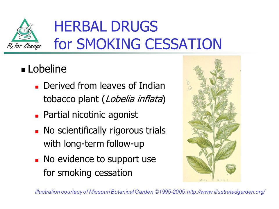 HERBAL DRUGS for SMOKING CESSATION