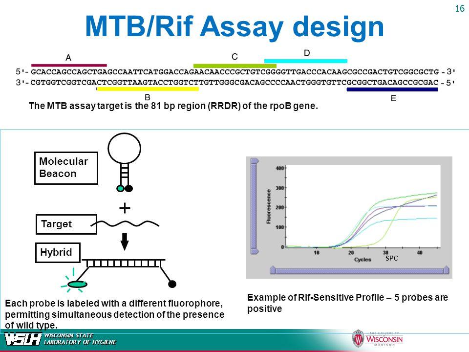 MTB/Rif Assay design Molecular Beacon Target Hybrid