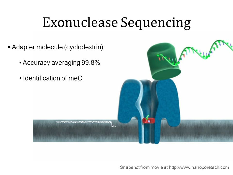 Exonuclease Sequencing