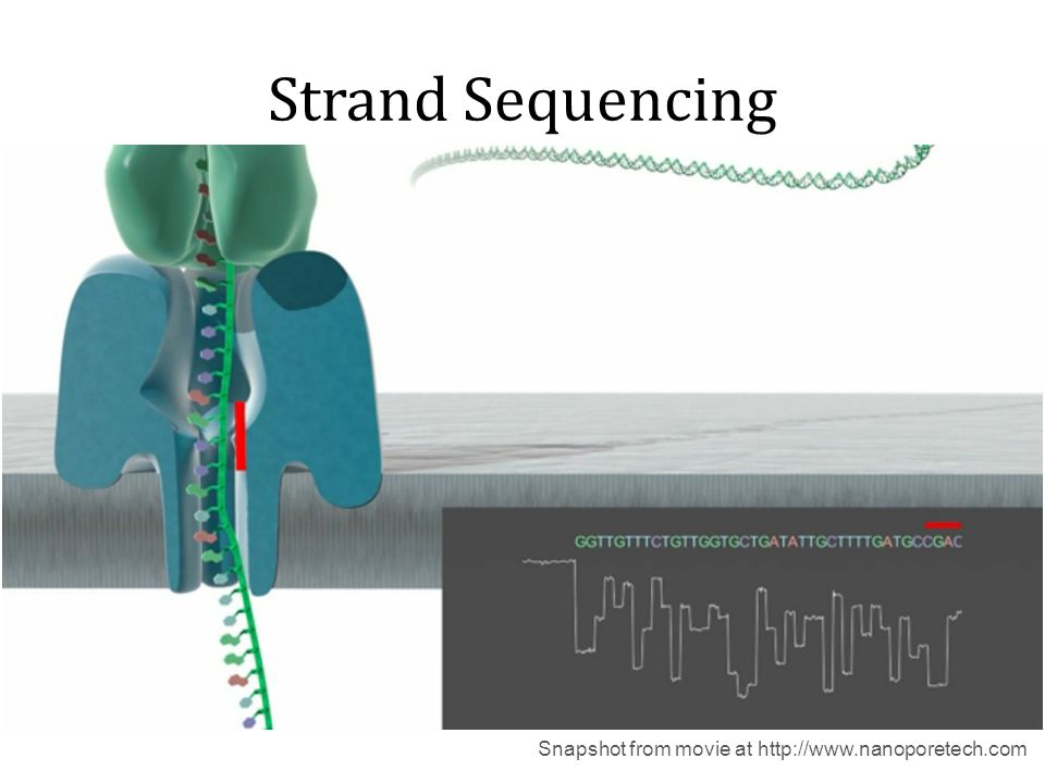Strand Sequencing Snapshot from movie at http://www.nanoporetech.com