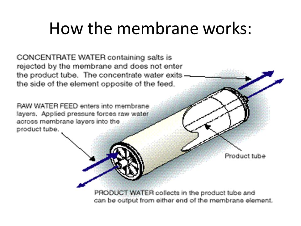 How the membrane works: