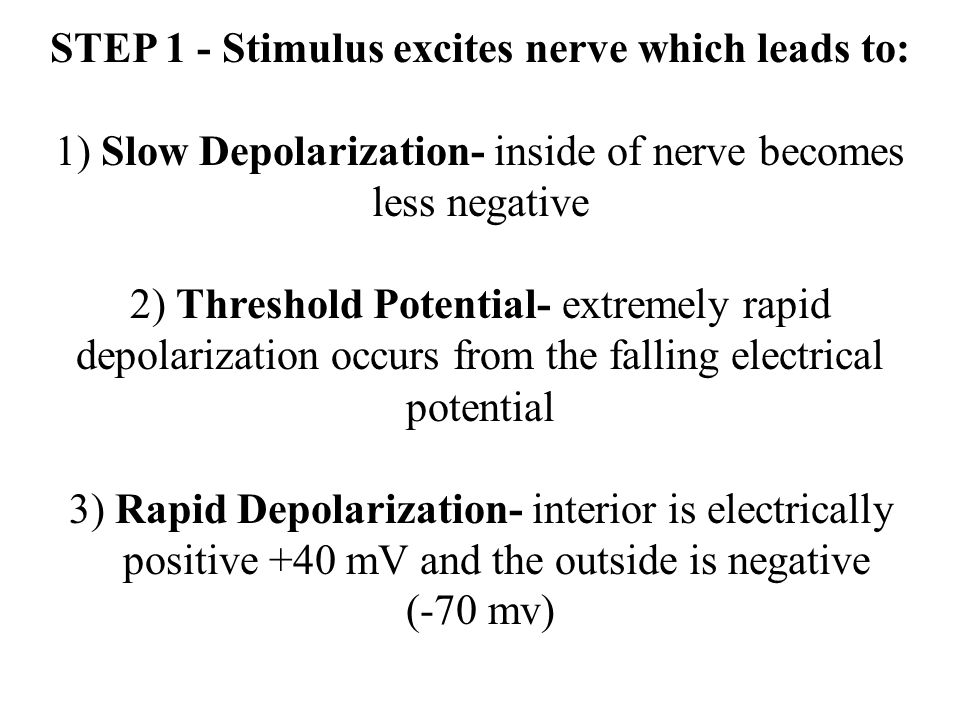 STEP 1 - Stimulus excites nerve which leads to: 1) Slow Depolarization- inside of nerve becomes less negative 2) Threshold Potential- extremely rapid depolarization occurs from the falling electrical potential 3) Rapid Depolarization- interior is electrically positive +40 mV and the outside is negative (-70 mv)