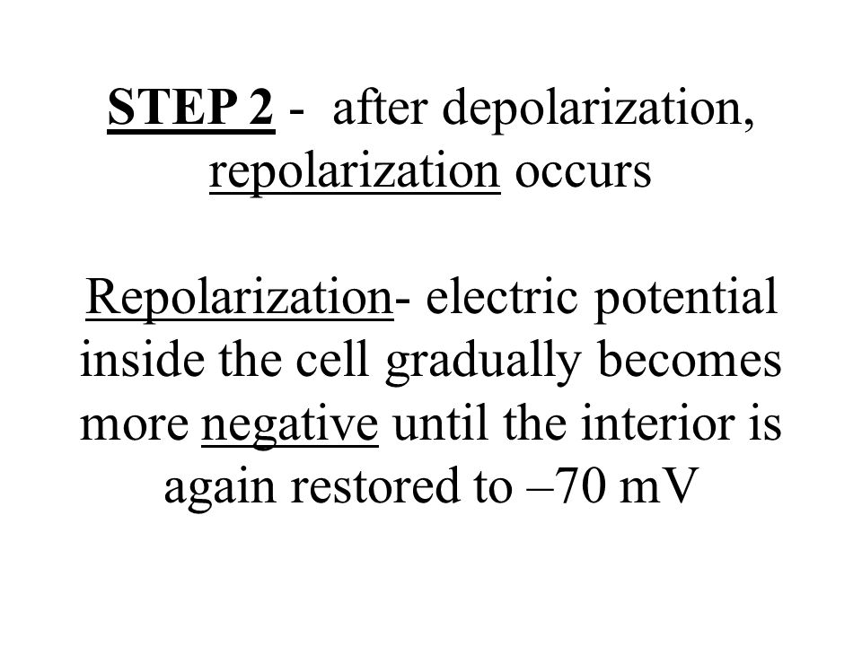 STEP 2 - after depolarization, repolarization occurs Repolarization- electric potential inside the cell gradually becomes more negative until the interior is again restored to –70 mV