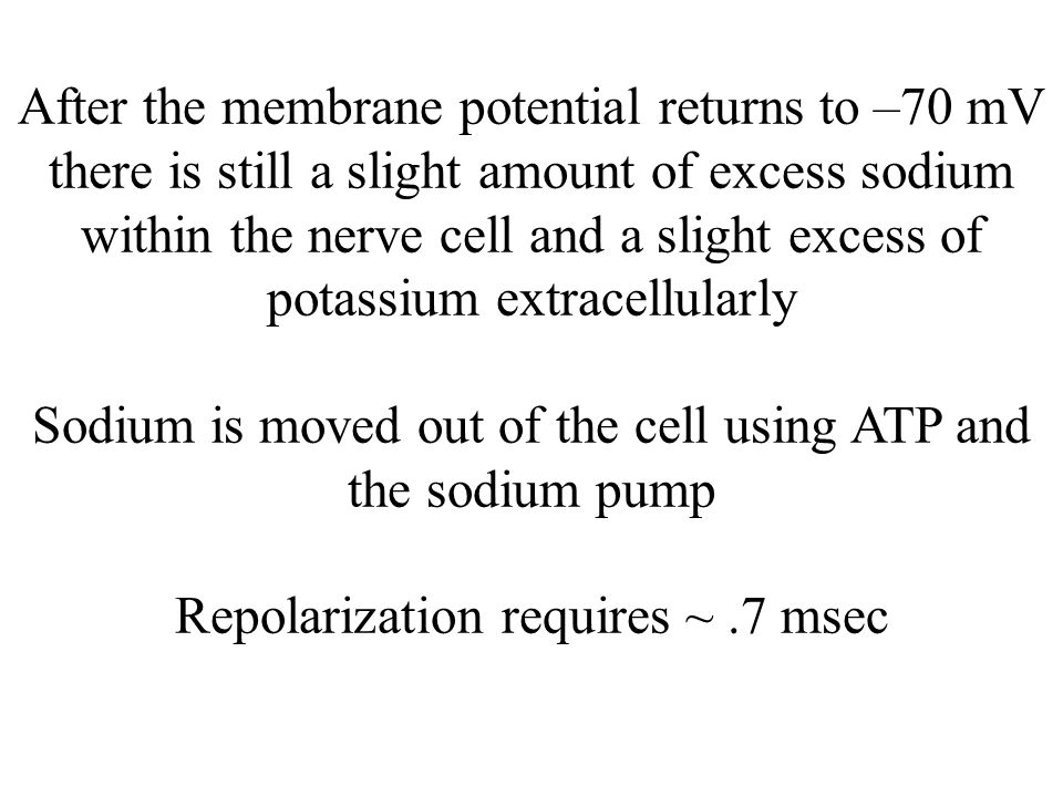 After the membrane potential returns to –70 mV there is still a slight amount of excess sodium within the nerve cell and a slight excess of potassium extracellularly Sodium is moved out of the cell using ATP and the sodium pump Repolarization requires ~ .7 msec