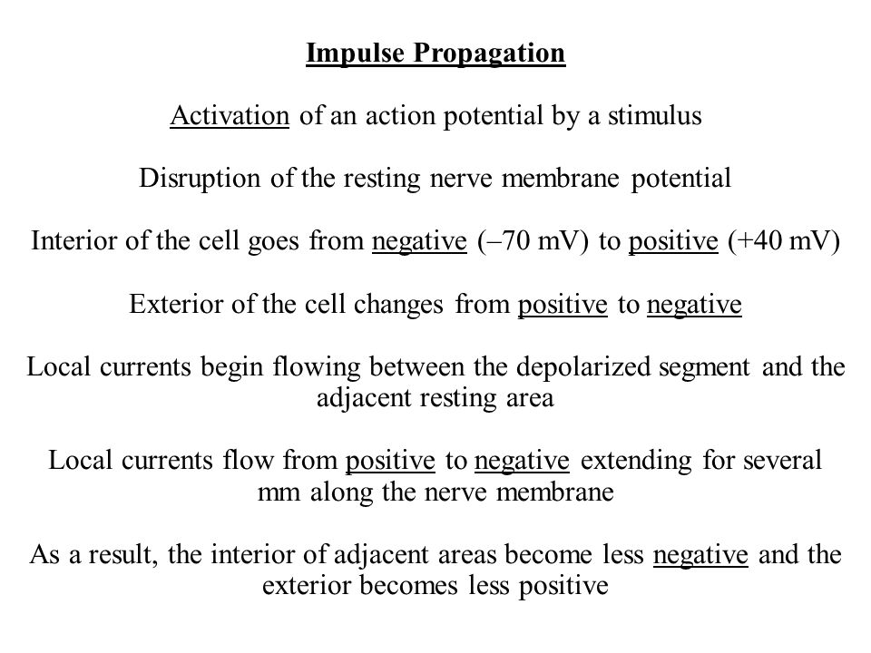 Impulse Propagation Activation of an action potential by a stimulus Disruption of the resting nerve membrane potential Interior of the cell goes from negative (–70 mV) to positive (+40 mV) Exterior of the cell changes from positive to negative Local currents begin flowing between the depolarized segment and the adjacent resting area Local currents flow from positive to negative extending for several mm along the nerve membrane As a result, the interior of adjacent areas become less negative and the exterior becomes less positive