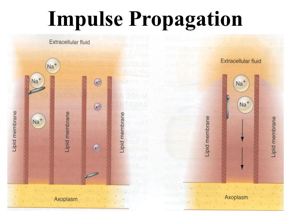 Impulse Propagation