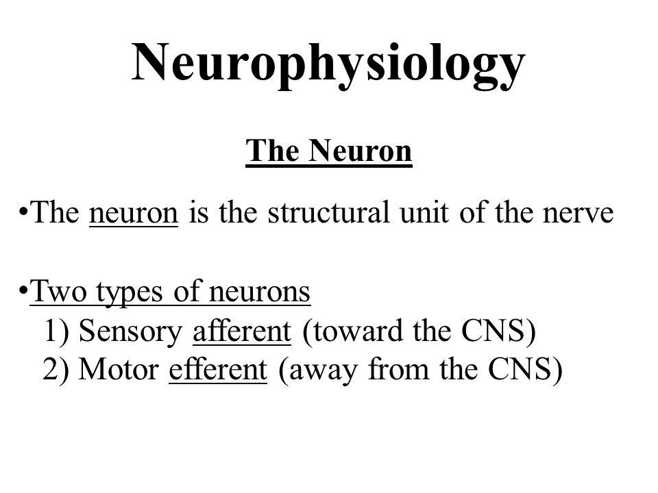 Neurophysiology The Neuron