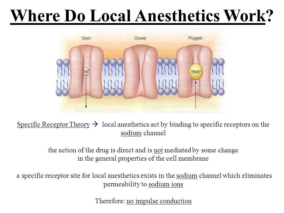 Where Do Local Anesthetics Work