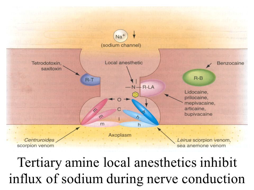 Tertiary amine local anesthetics inhibit influx of sodium during nerve conduction