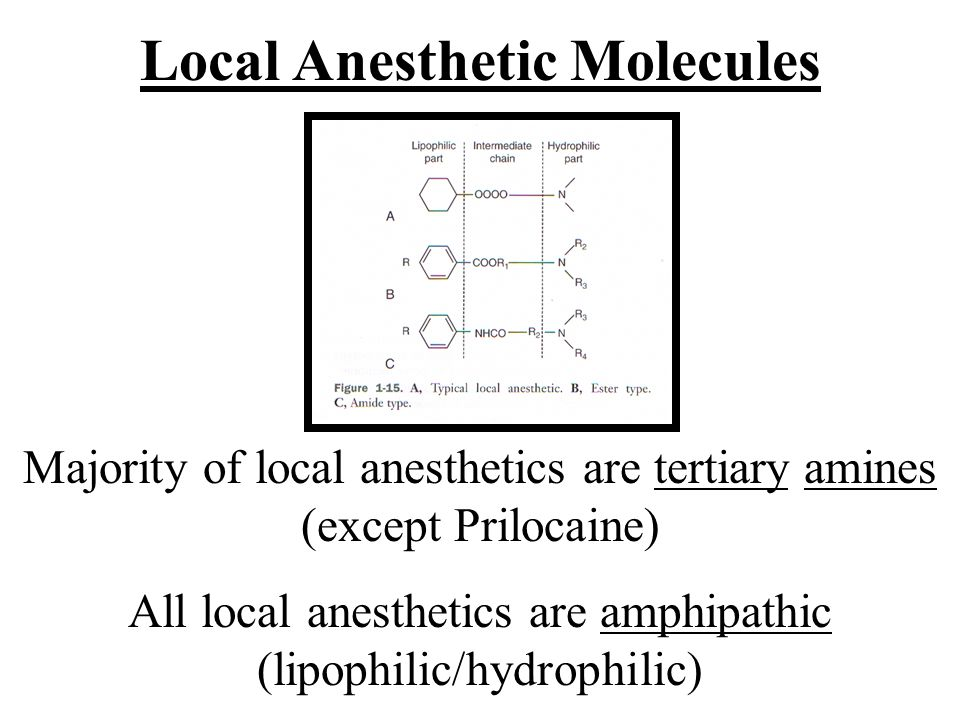 Local Anesthetic Molecules