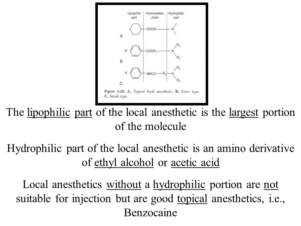 The lipophilic part of the local anesthetic is the largest portion of the molecule