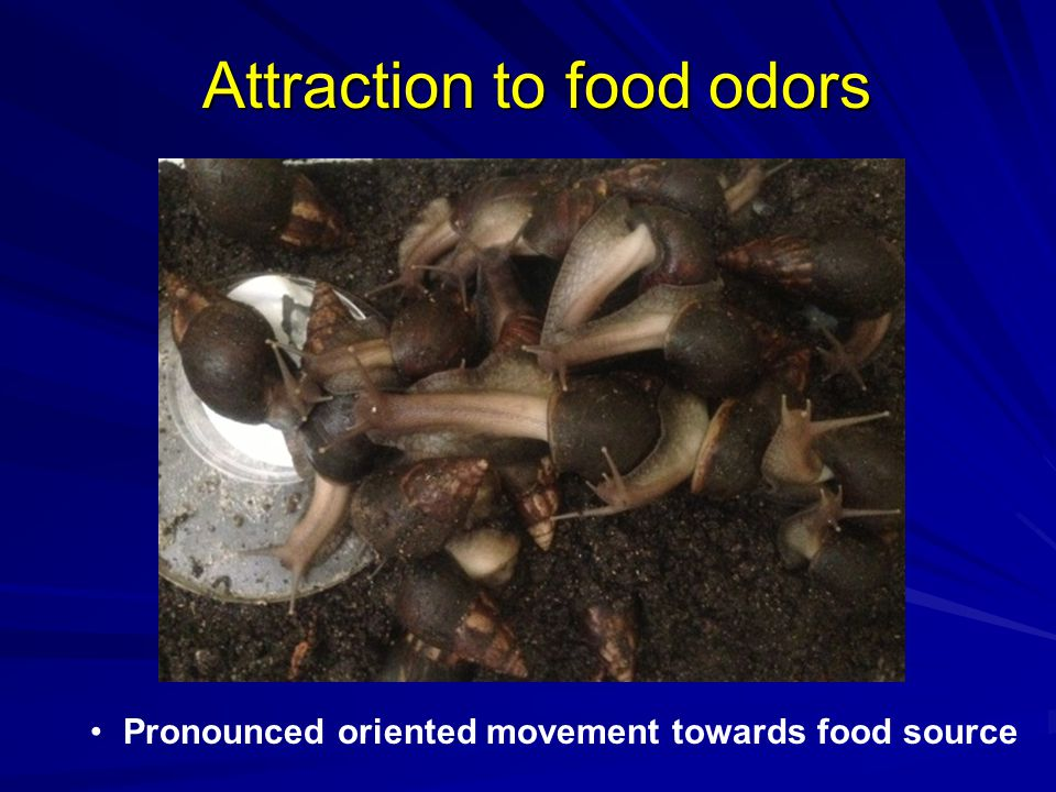 Attraction to food odors