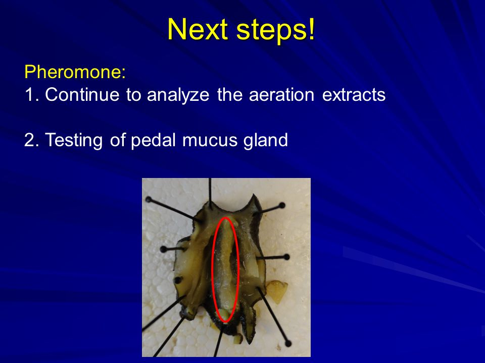 Next steps! Pheromone: 1. Continue to analyze the aeration extracts