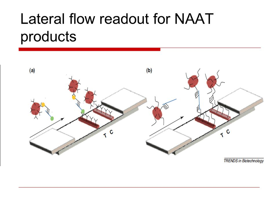 Lateral flow readout for NAAT products