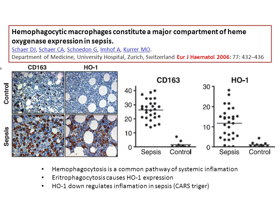 Hemophagocytic macrophages constitute a major compartment of heme oxygenase expression in sepsis.